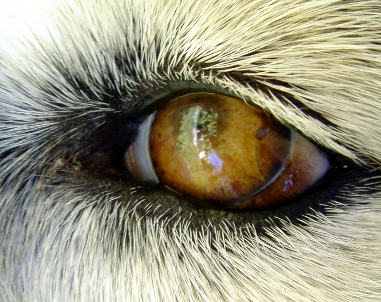 dog-eye-1513010
