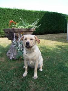 Eduacation canine